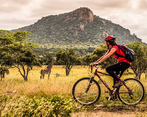 Bike in the wild