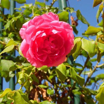 Ce lieux doit ce voir avec les yeux donc juste la photo d'une rose du parc