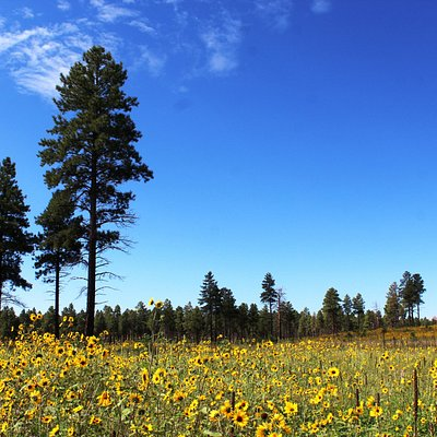 These beautiful wildflowers are off westbound old route 66, heading towards the I40.