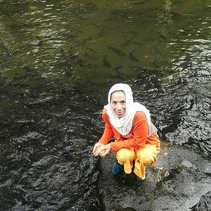 Ikan Larangan, Padang Sumatera Barat.