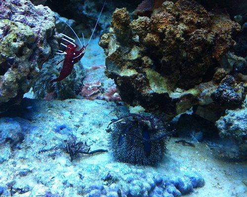 """Центр океанографии и морской биологии """"Дельфиния"""""""