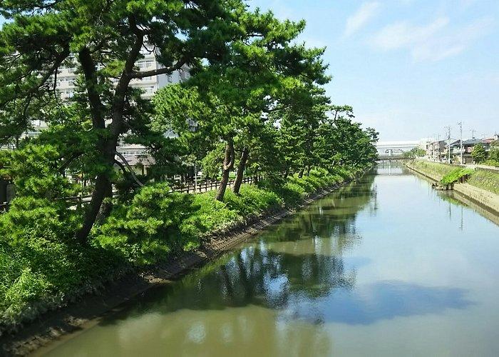 橋に沿った並樹