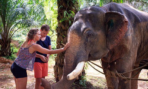 Somboon the Elephant, enjoying a good nose rub :)