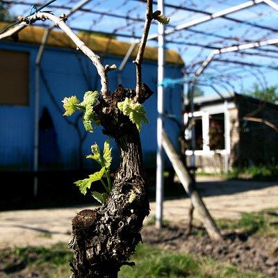 Die Britzer WeinKultur: Wein - Musik - Unterhaltung - Speisen und vieles mehr...