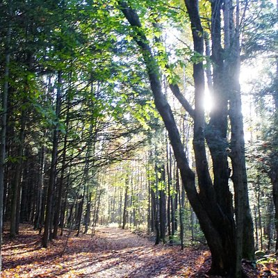 Le soleil qui se couche et éclaire le sentier du bois Beckett.