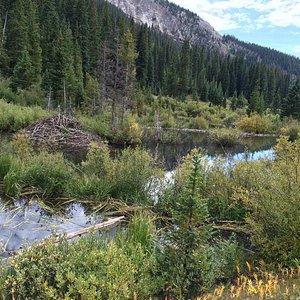Beaver pond on Copper Creek Trail