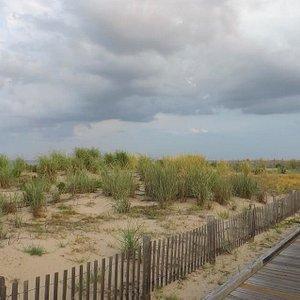 Dune Nature Park at Rehoboth Beach, Delaware