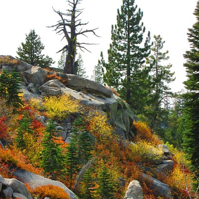 This coming down the Mt. Judah trail last fall 2015.