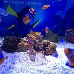Tanks of fish