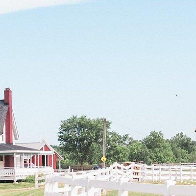 The Petting Farm at Domino's Farms