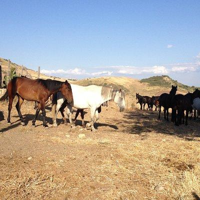 I nostri cavalli... eccoli
