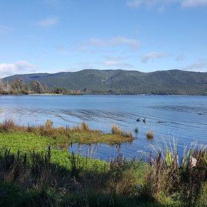 湖面有幾隻鳥