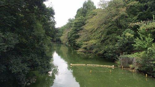 """中ノ橋から見た""""あしの島""""方面。"""
