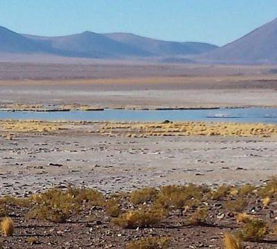 Vista a la laguna del Salar, en el centro se aprecian los flamencos de color Rosados