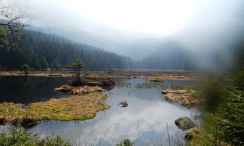 Parc national de la Forêt bavaroise (photo par Isabelle Auer)