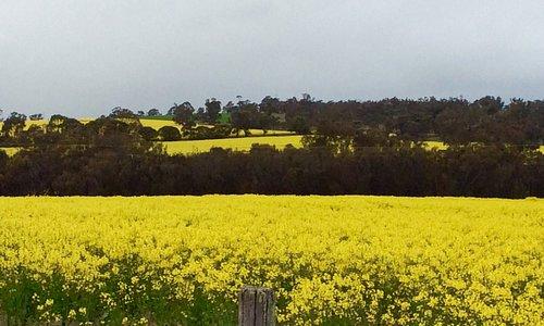 Veggie Oil Flowers Field