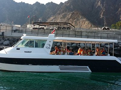 Dolphin watching trip
