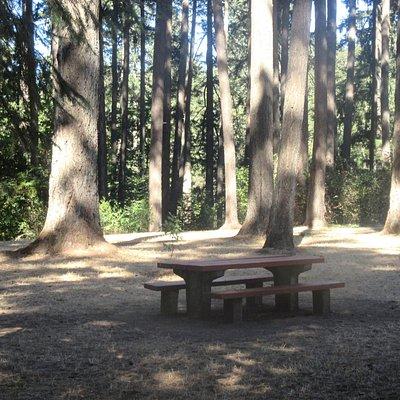 Picnic Tables, Hendricks Park, Eugene, Oregon