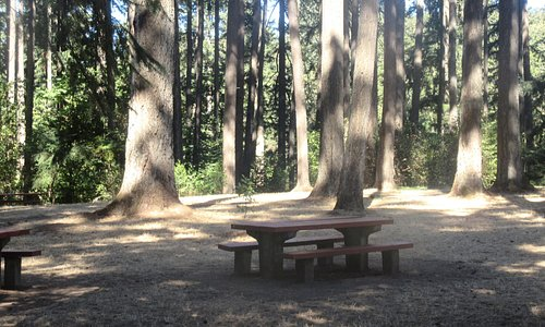 Picnic Tables, Hendricks Park, Eugene, Oregon