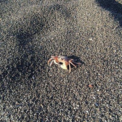 清水海邊很好抓螃蟹