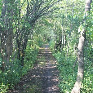 The path that surrounds the wetlands