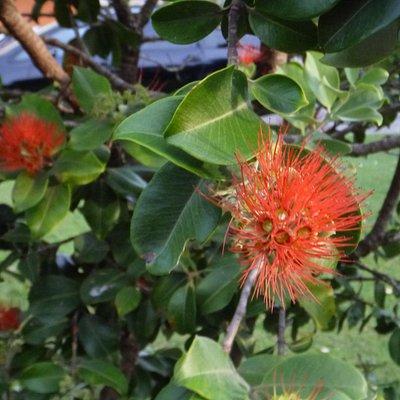 Port Stephens Native Flora Garden