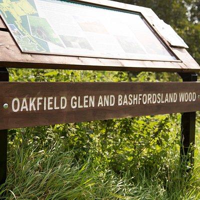 Bashfordsland Wood