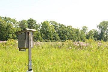 Bird Boxes at Black Swamp Preserve