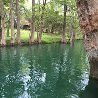 Cypress trees at the Blue Hole