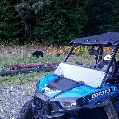 Bear watching experience!