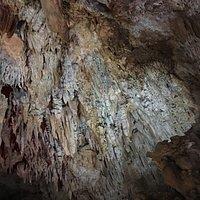 八重山 鍾乳洞 動植物園