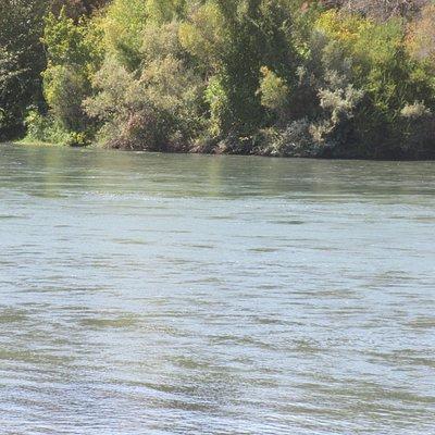 Sacramento River, Sacramento River Bend Area, Red Bluff, CA