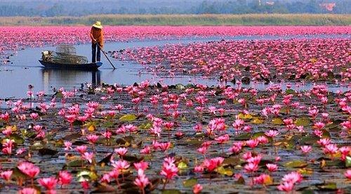 Lotus Lake UdonThani