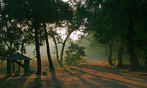 Natural Beauty at its peak, Bandhavgarh National Park