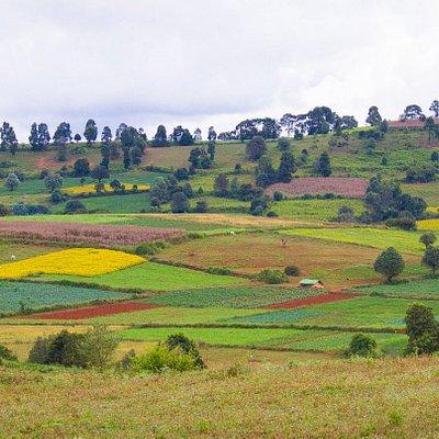 Beautiful fields you will walk through on our trek