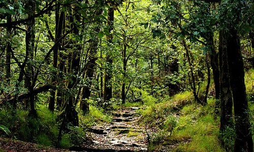 The road takes you deeper inside the jungle.It is close to the path that takes you to zero point