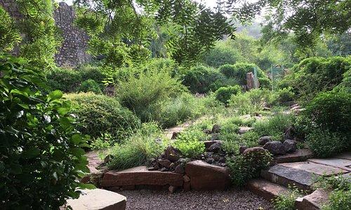 Native Plants garden in the Vistors Centre