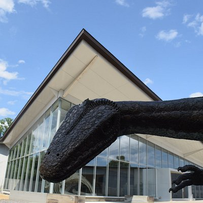 Say hello to Cecil the Coelophysis, the Museum's mascot!