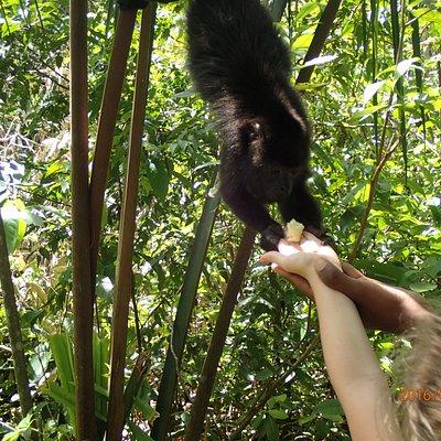 Monkey Loves bananas!
