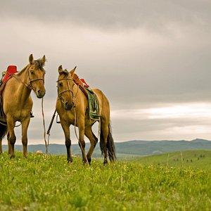 Beauty of Mongolia