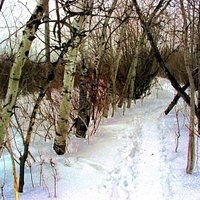 Trails in winter