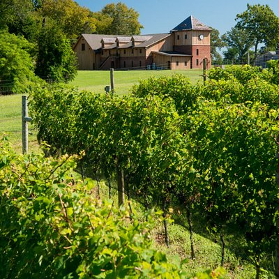Vines with Winery in background