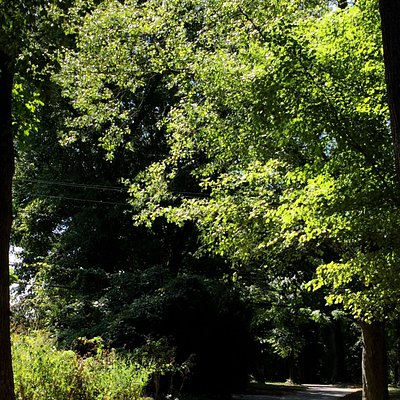 Haverford College Trail