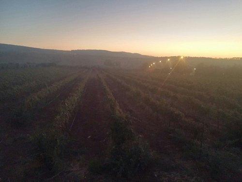Ziv Winery