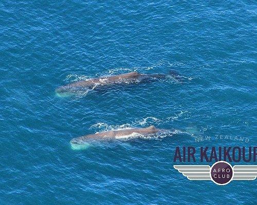 2 Sperm Whales