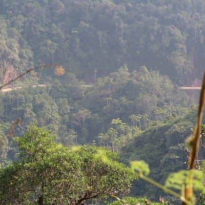 Bosque de Sho'llet – Área de conservación, Viila Rica Peru / Oxapampa