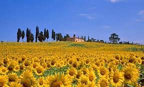 The magic of Tuscany in July