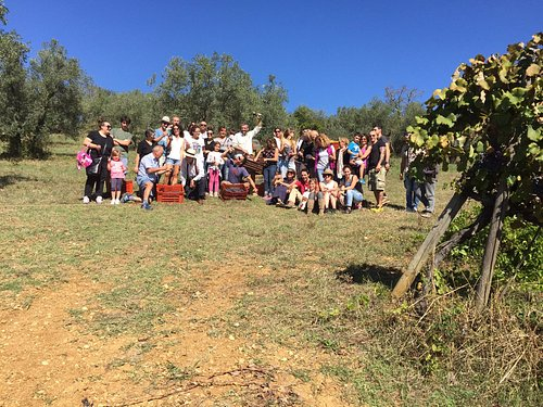 Harvest time, late September, Chianti Classico, wine experience with De Gustibus Wine and Food T