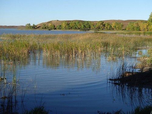 Marsh at edge of lake, Big Alkali WMA