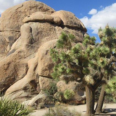Amazing Rocks, Joshua Tree National Park, Ca